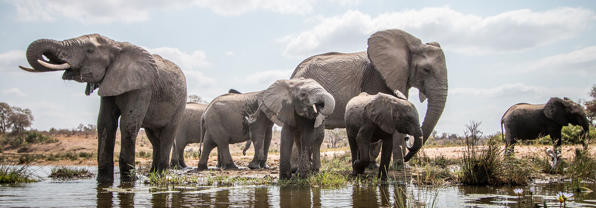 Elephants at Waterhole