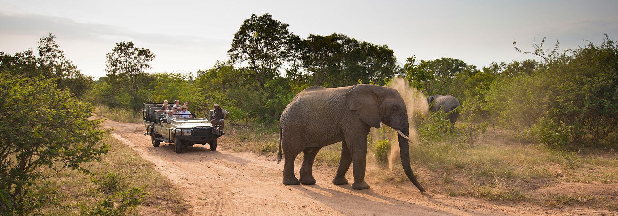 Safari Game Drive at Kapama