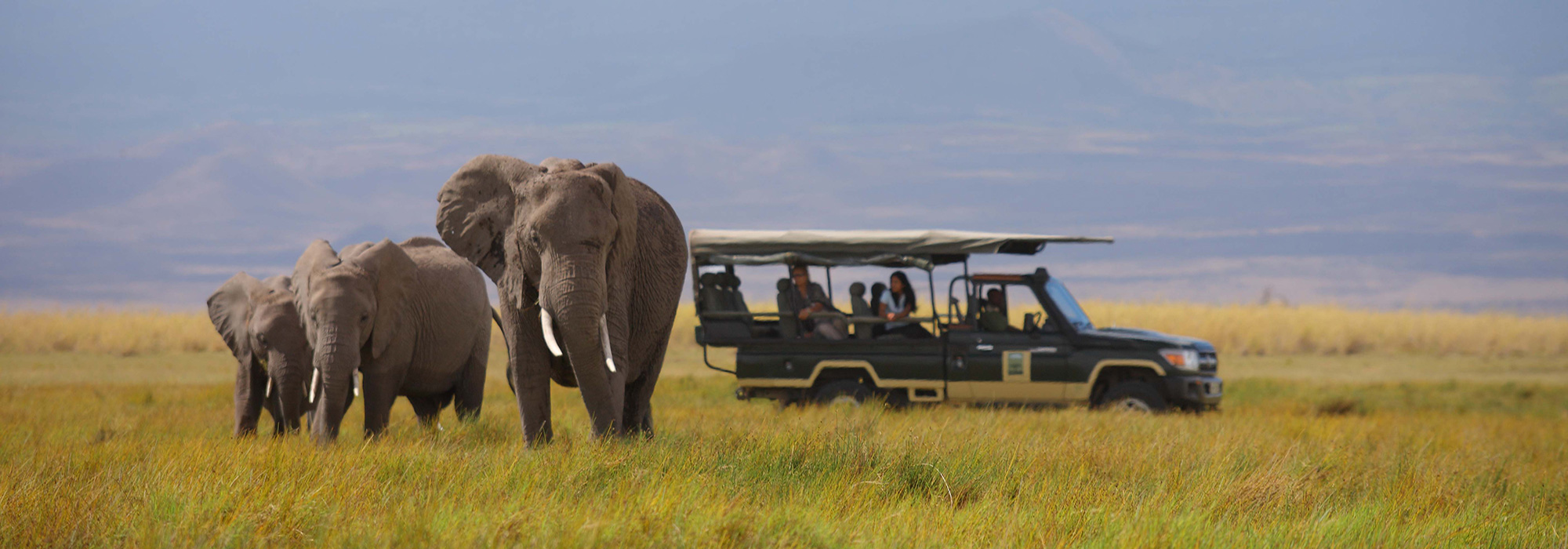 Game Drive in East Africa