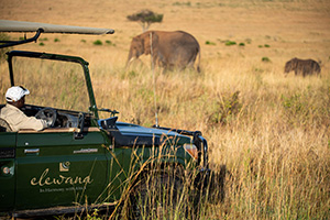 Looking for wildlife on safari