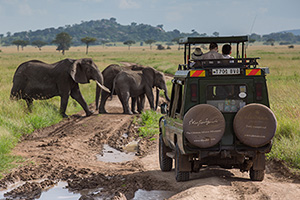 On a Game Drive at Serengeti Pioneer Camp