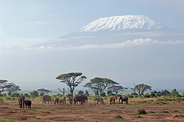 Amboseli Elephants with Mount Kilimanjaro in the Background