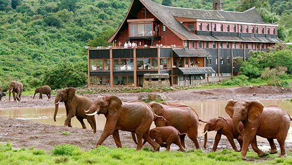 Elephants at The Ark