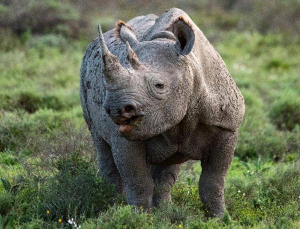 Happy Rhino at Shamwari