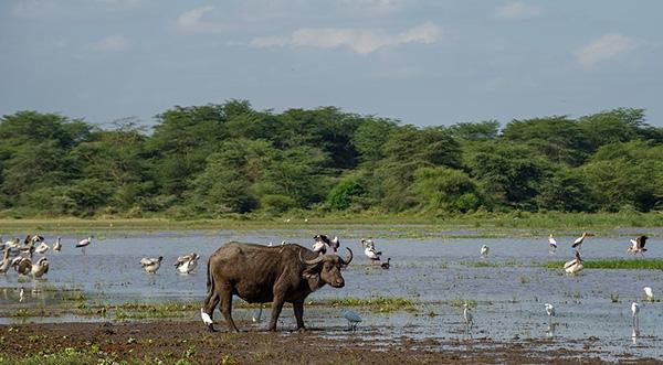 Birdlife at Lake Manyara