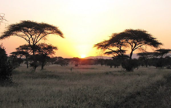 Early Morning Sunrise in the Serengeti