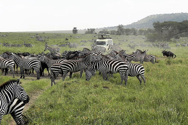 See abundant wildlife on your Game Drives in Tanzania
