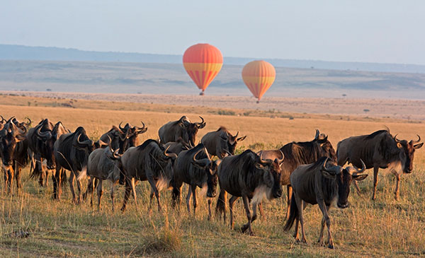 Hot Air Balloon Ride in East Africa - Soar Above the Animals