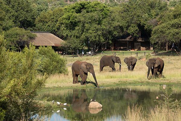 Watching Elephants at Bakubung