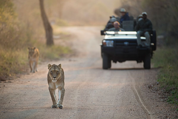 On a Game Drive at Kapama Private Reserve