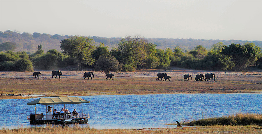 Elephant viewing in Chobe National Park, Botswana