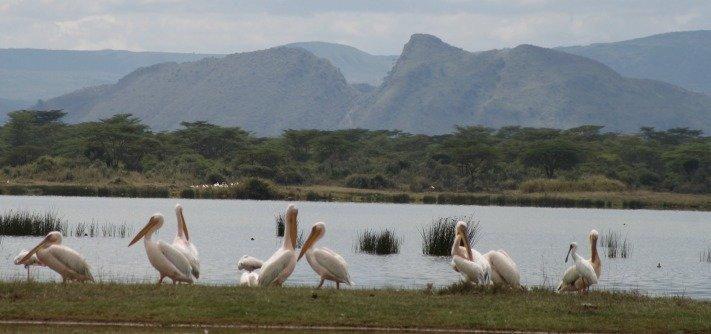 African Safari Kenya, Lake Elmenteita