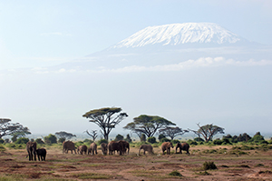 Amboseli Views