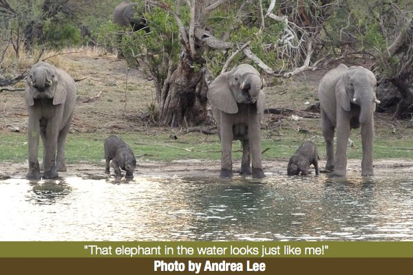 Andrea Lee's Elephant Photo