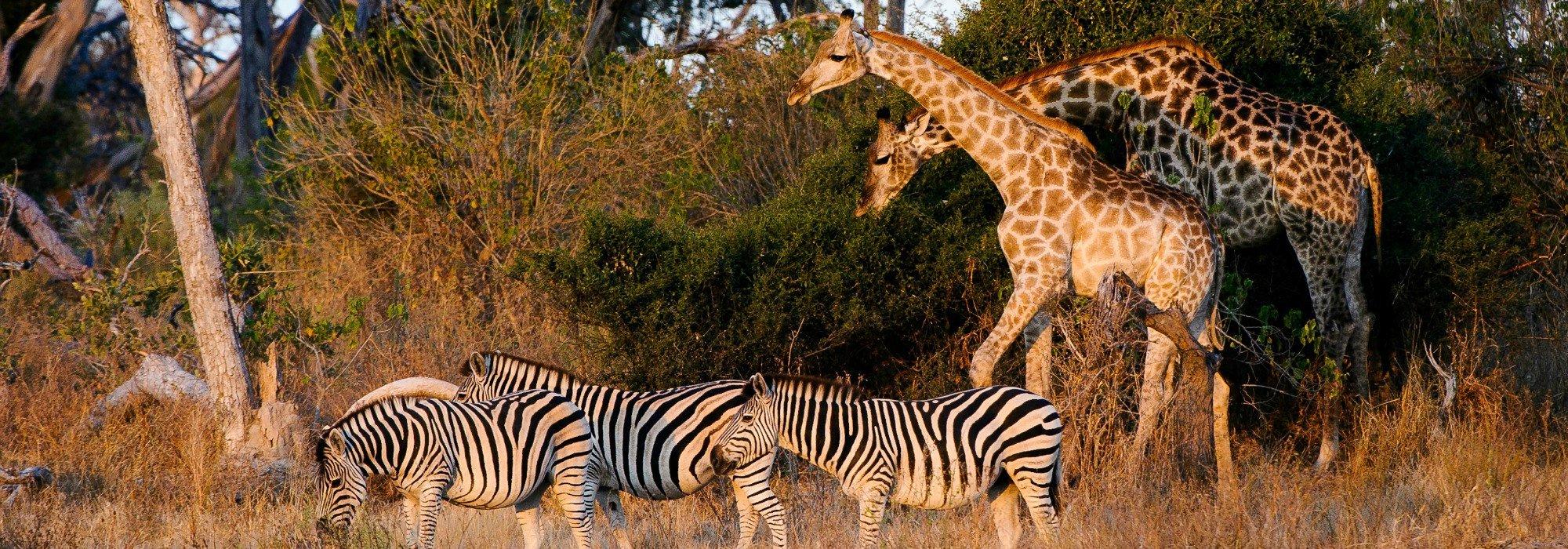 Mombo Wildlife