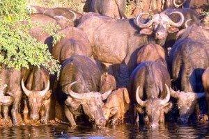Wildlife on safari in Sabi Sands Game Reserve