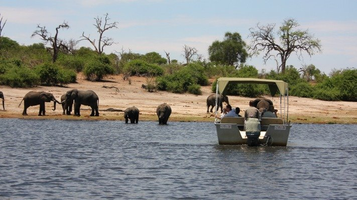 Chobe River boat safari