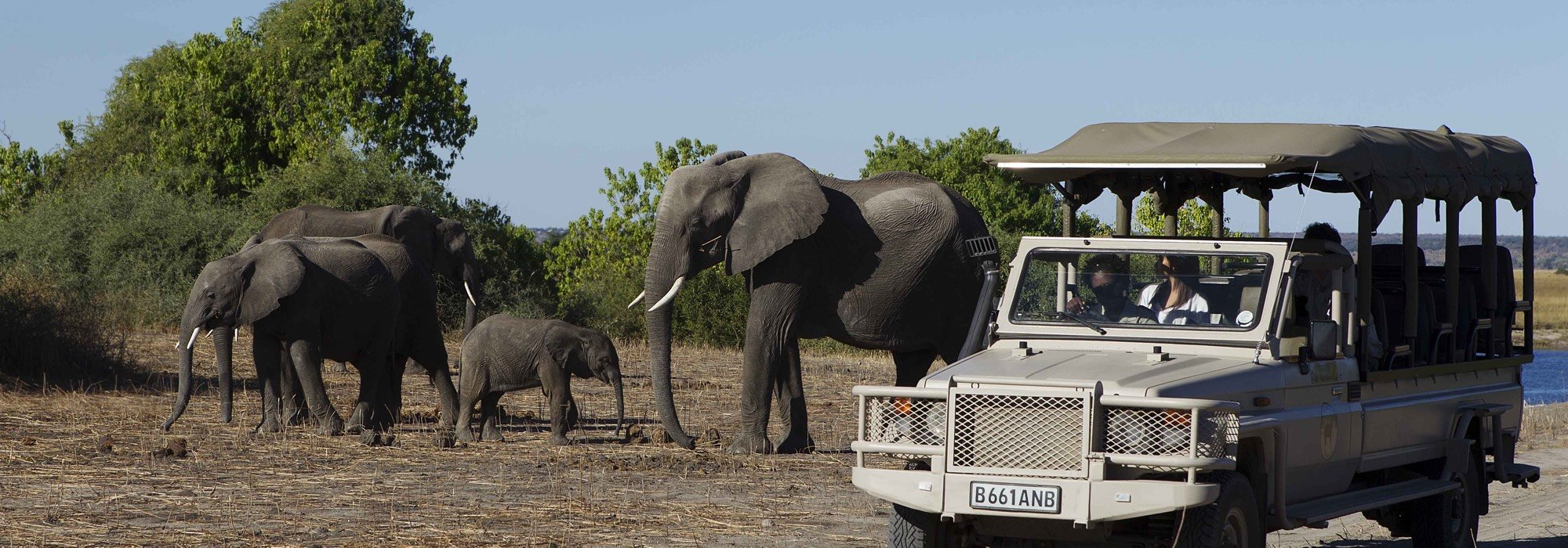 Elephants on safari in Botswana