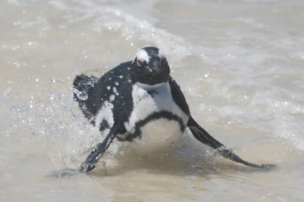 Sliding penguin