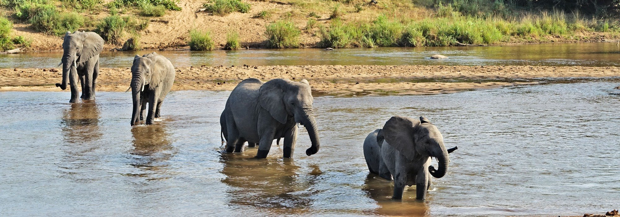 Elephants at Thornybush Game Reserve