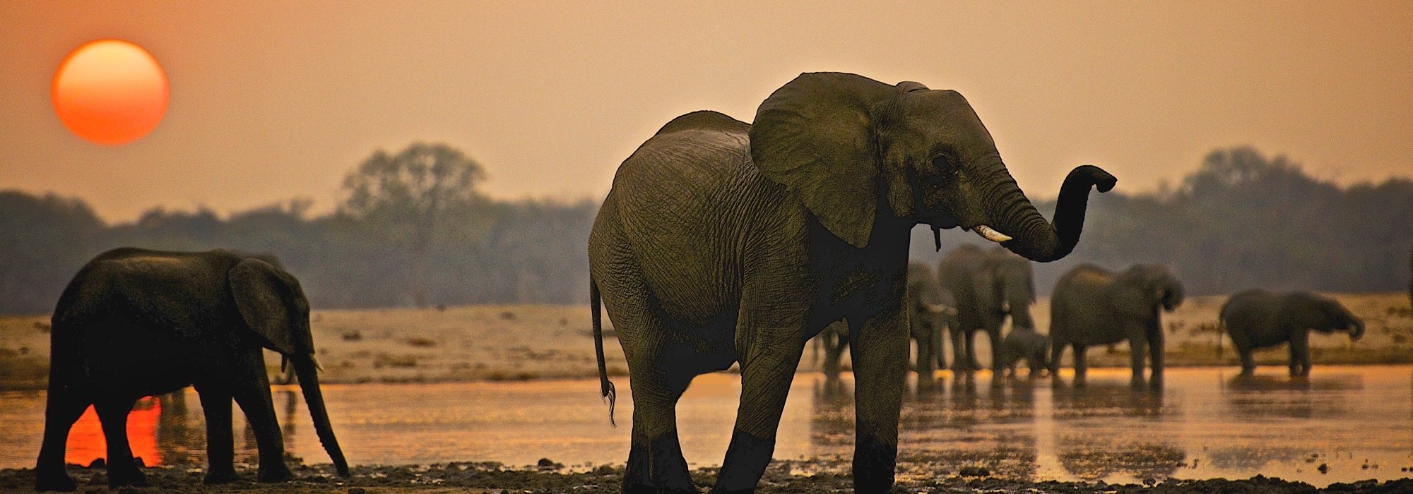 Elephants at Hwange National Park