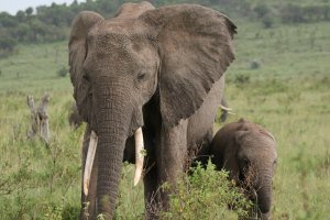 Elephants of Tarangire