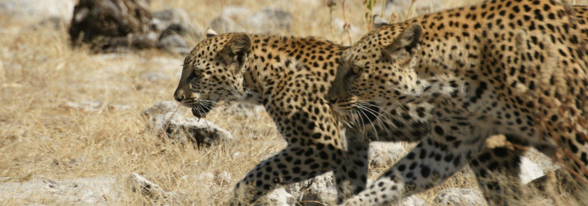 Etosha Game Reserve