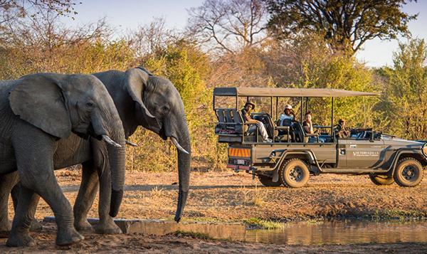 Game Drive Stanley and Livingstone
