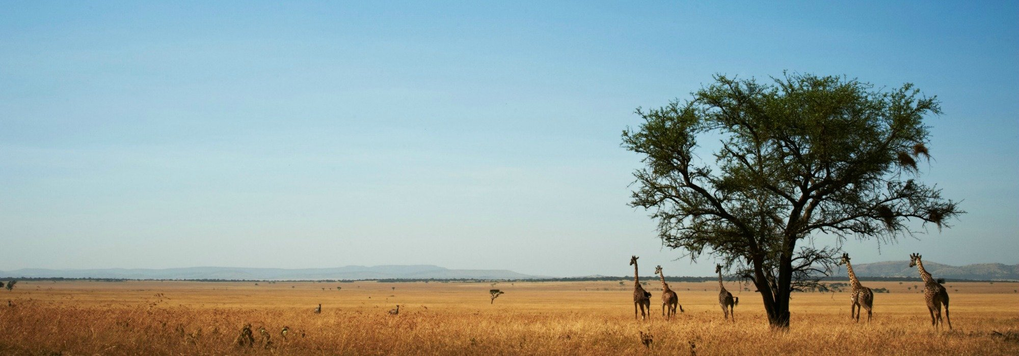 Serengeti Grumeti Reserves