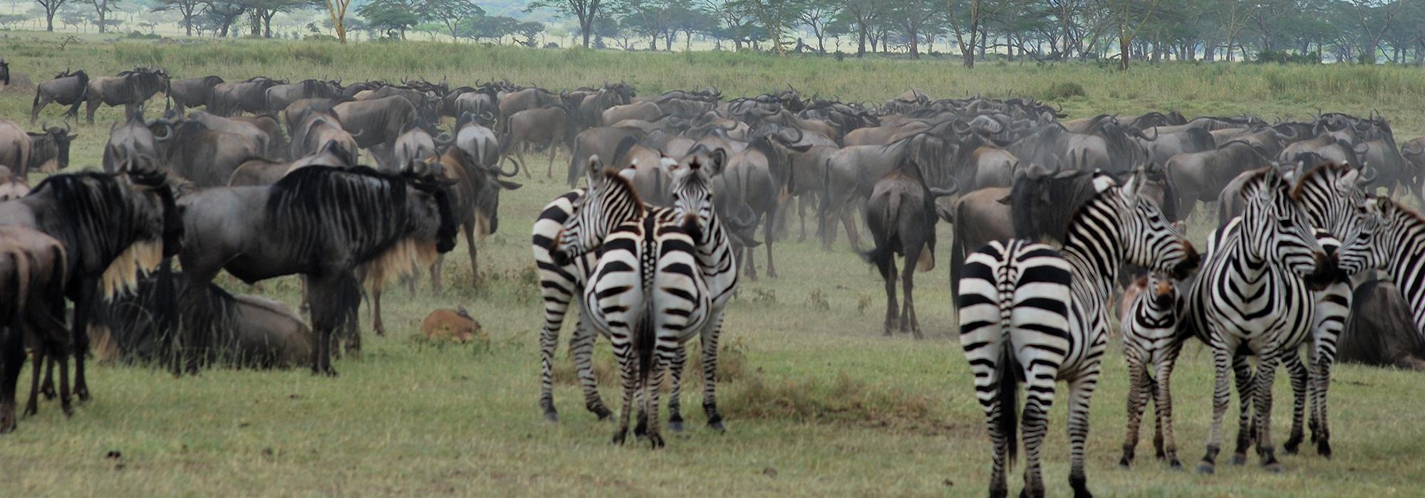 Migration in Tanzania