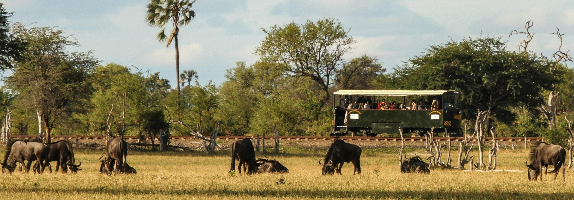 Elephant Express in Hwange National Park