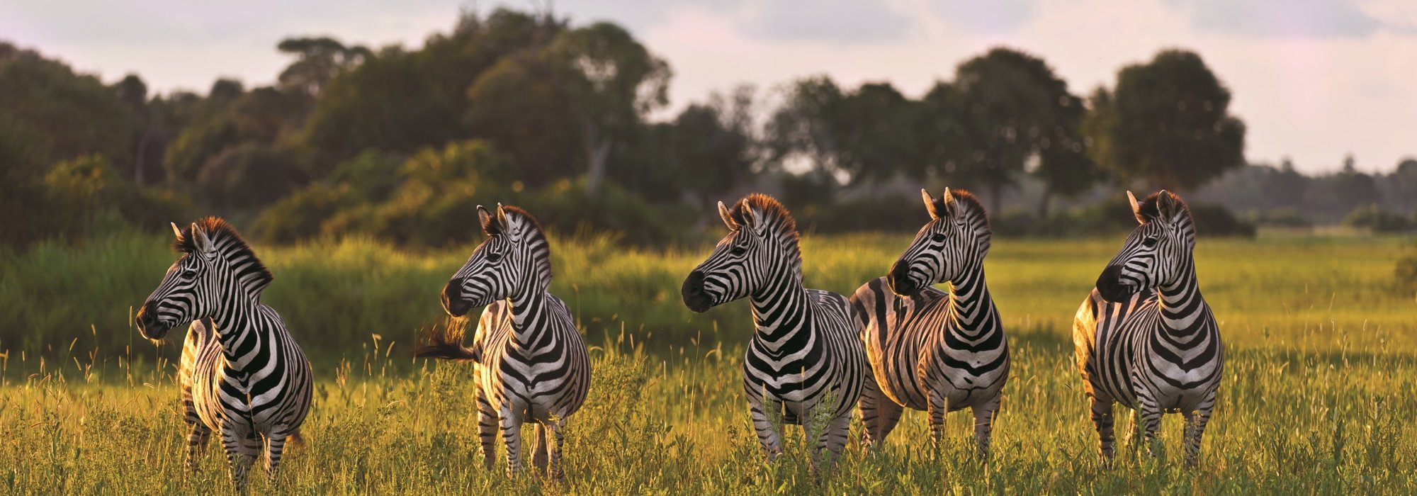 Zebra at Thornybush Game Reserve