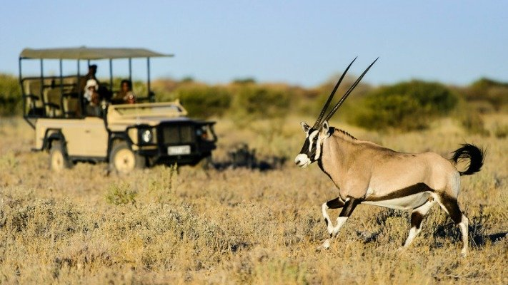 Wildlife of the Kalahari
