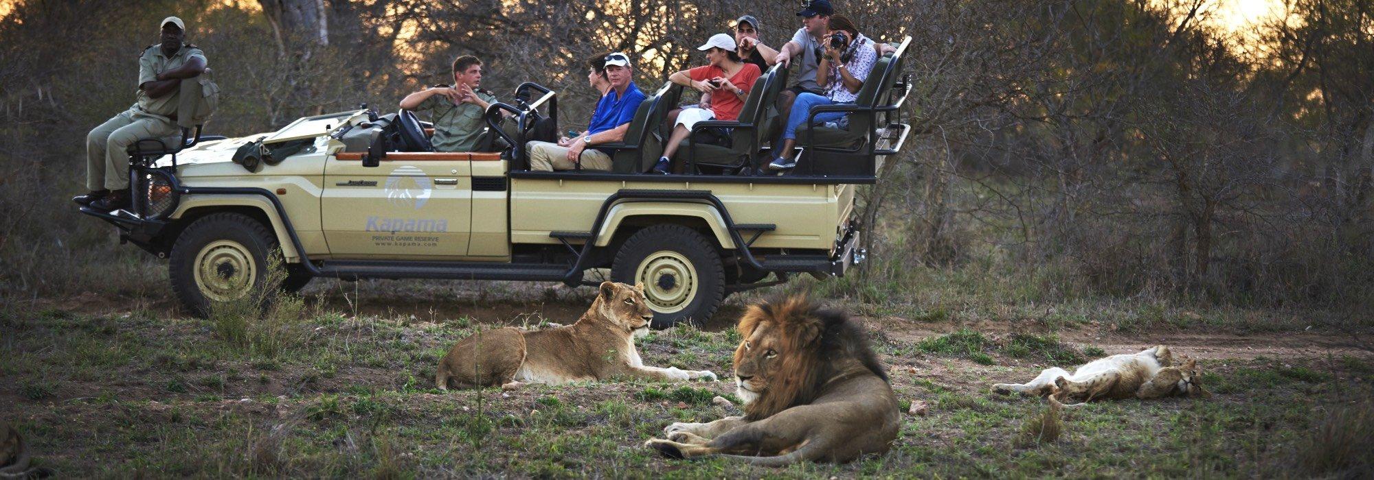 Lions on safari at Kapama