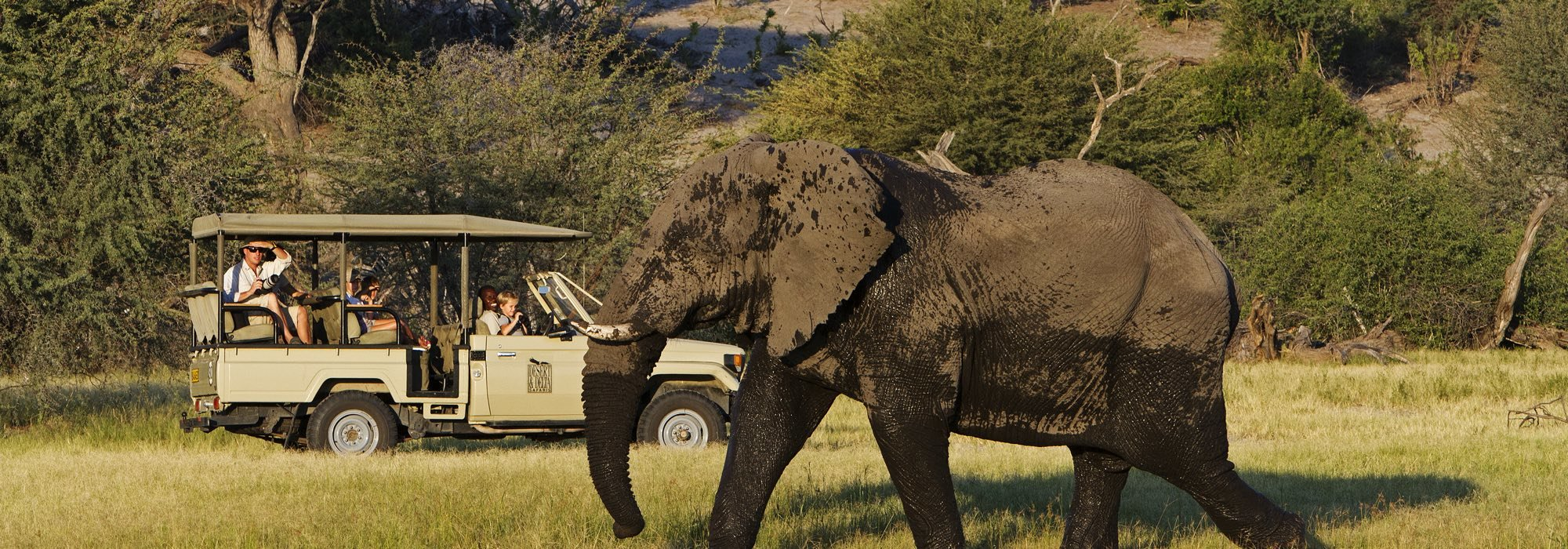 Elephant on a game drive in Botswana