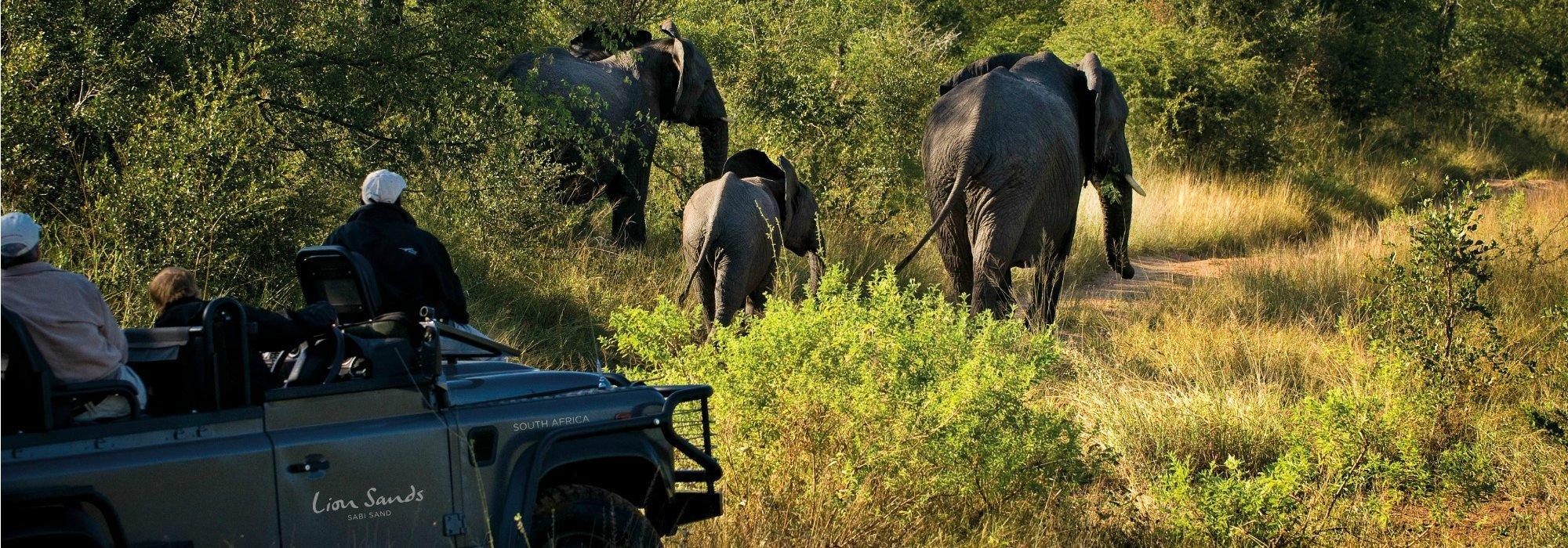 Lions Sands Game Reserve Safari