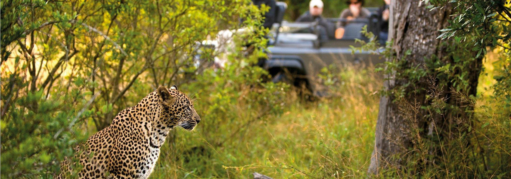 Lion Sands Game Reserve safari