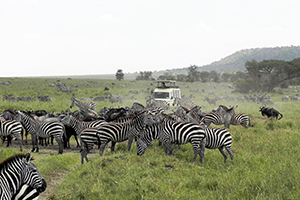 Wildlife on the Serengeti Plains