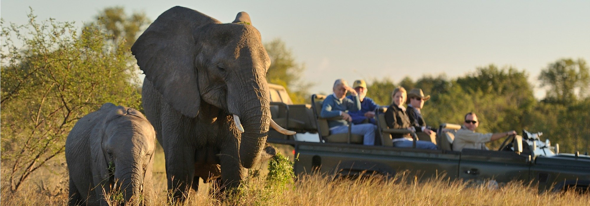 Elephants on safari at Sabi Sabi