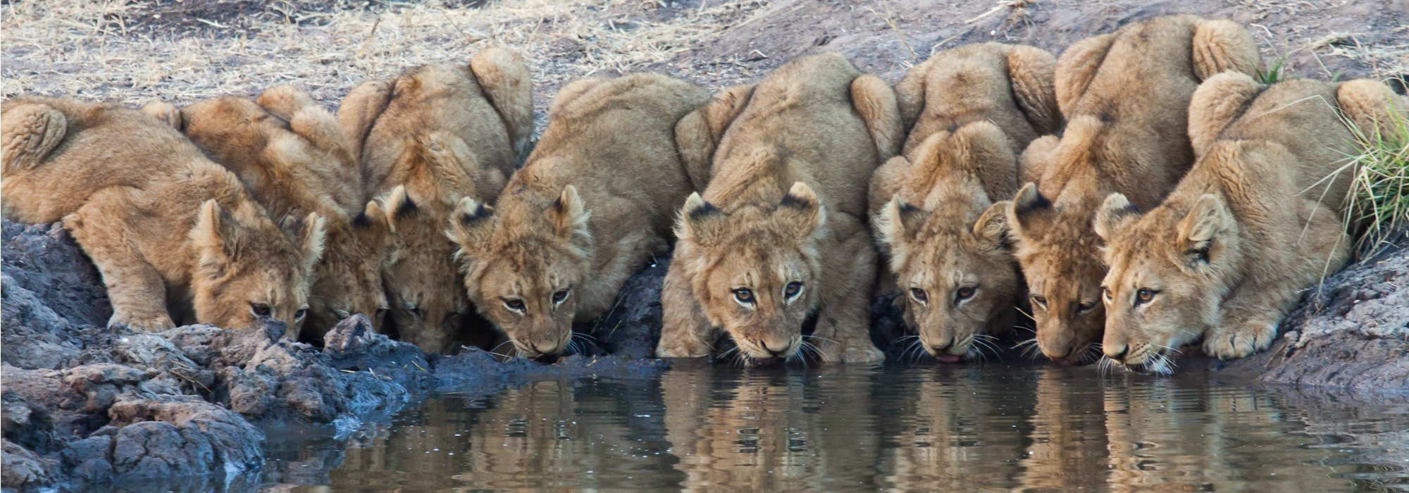 Family Fun In South Africa 2018 Amp 2019 Lion World Travel