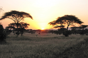 Sunrise at Serengeti