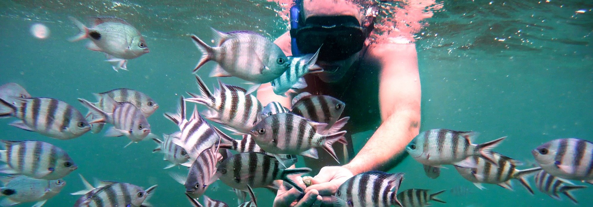 Mauritius snorkelling