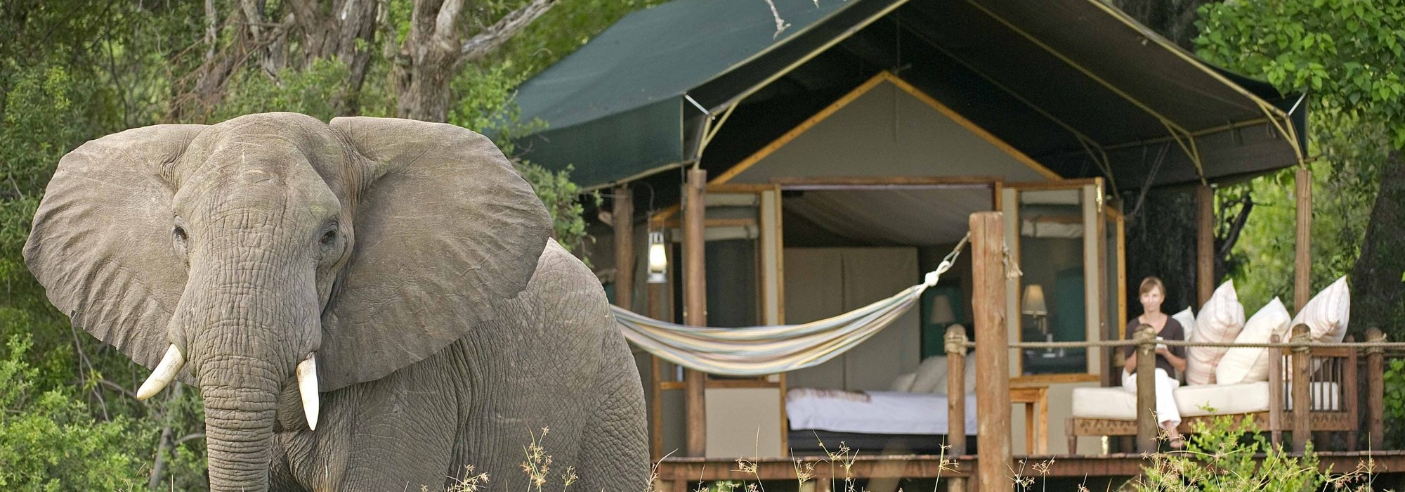 Elephant at Stanley's Camp, Botswana