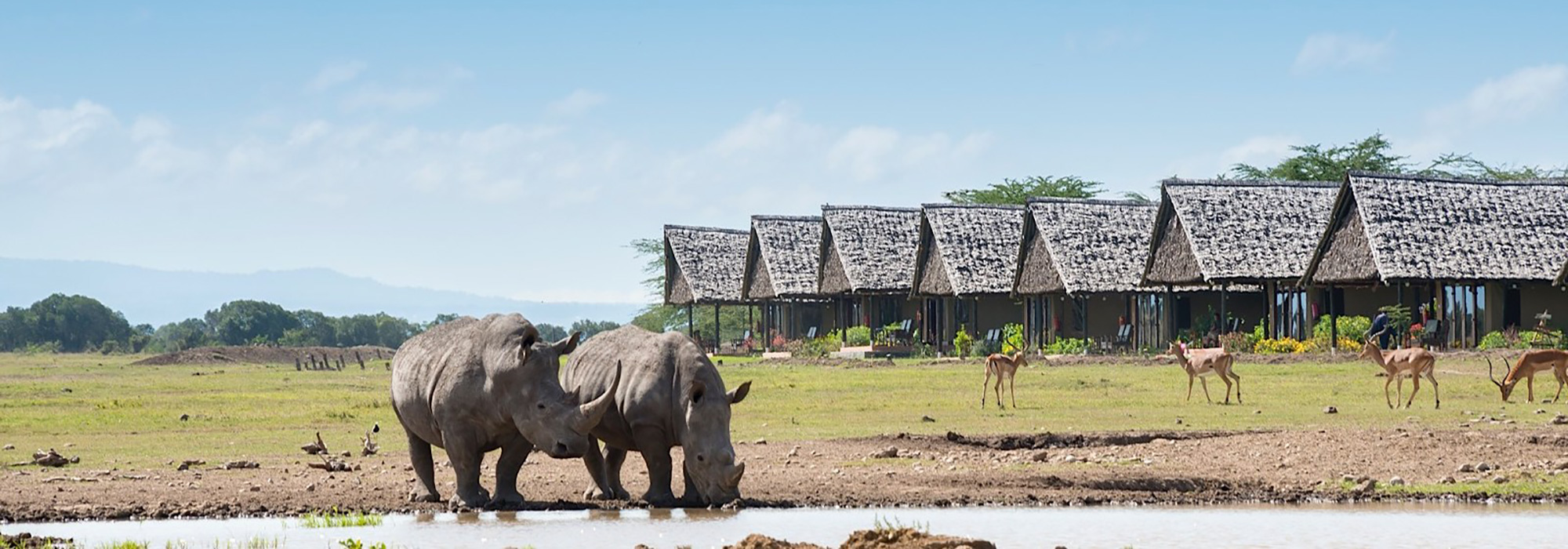 Rhinos at Sweetwaters