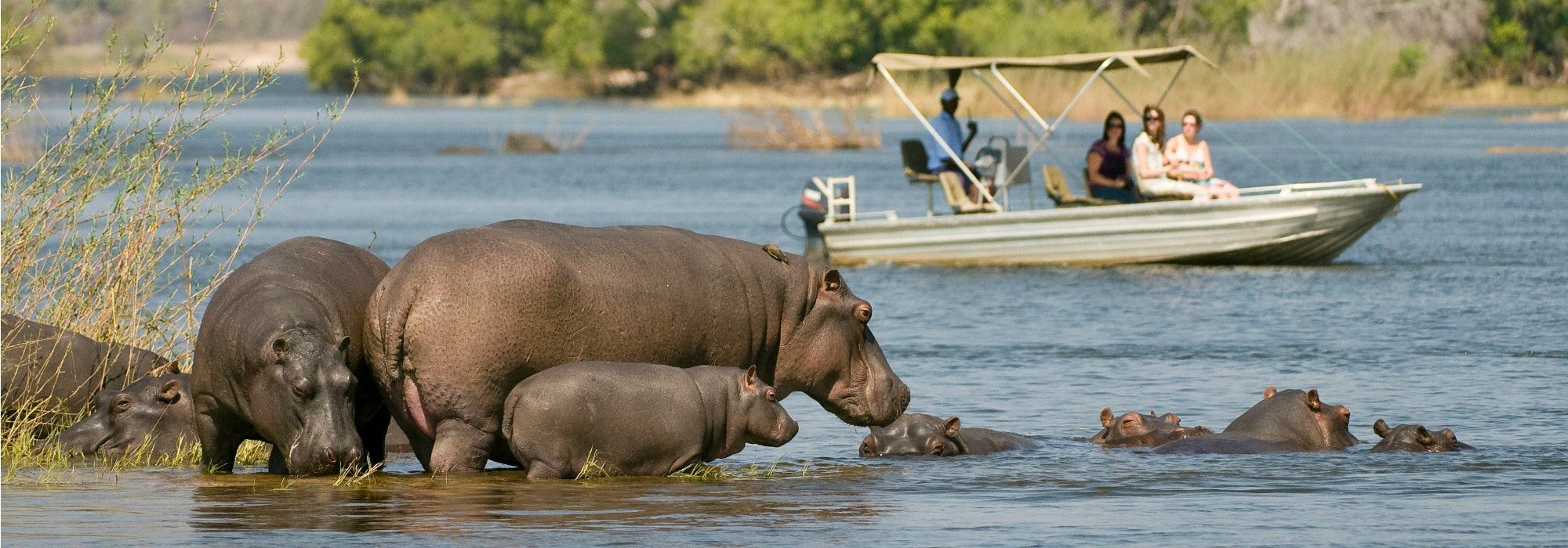 Zambezi River boat safari