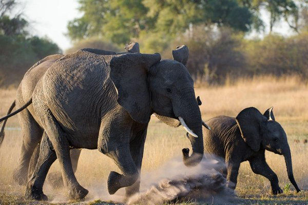 Elephant mother and baby in Kenya