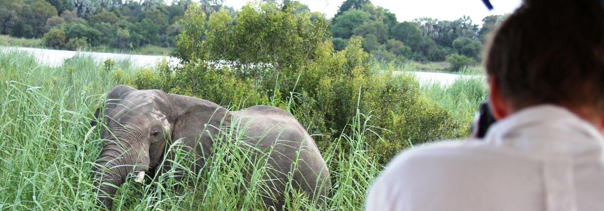 Elephant sighting on Zambezi river cruise