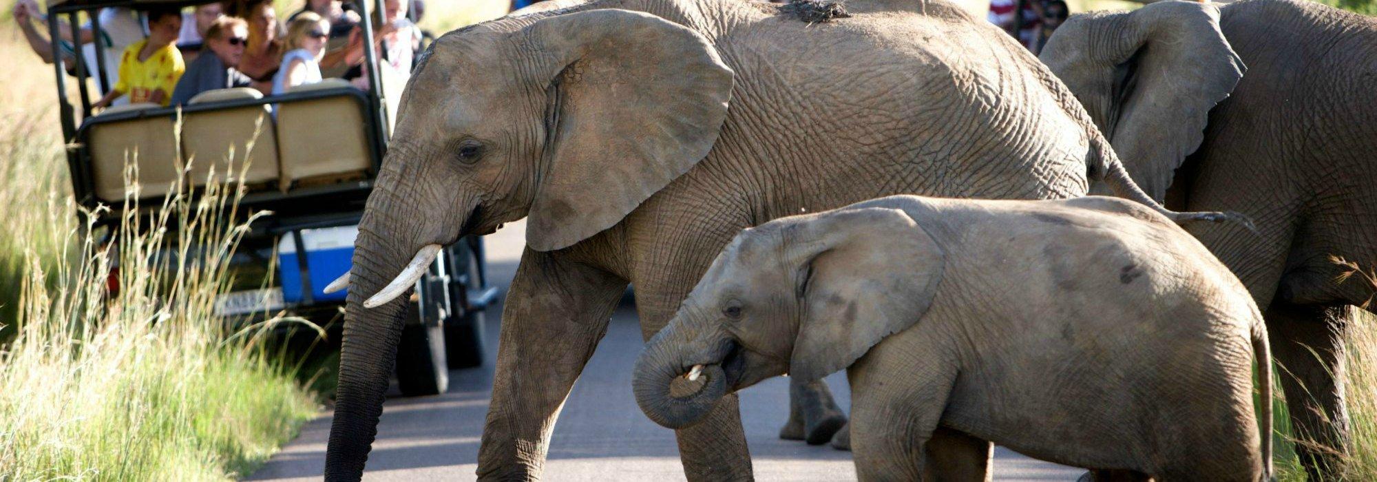 Pilanesberg Game Reserve Safari