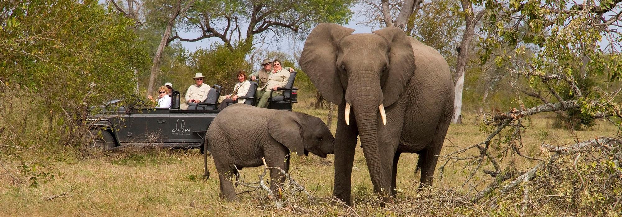 Elephants on Safari in South Africa