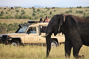 Game Drive in the Mara